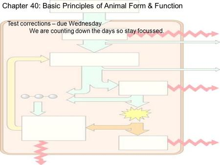 Chapter 40: Basic Principles of Animal Form & Function Test corrections – due Wednesday We are counting down the days so stay focussed.