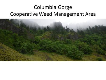 Columbia Gorge Cooperative Weed Management Area. Plant Communities Wildlife habitat Water resources Fisheries Recreation Natural processes Invasive Plant.