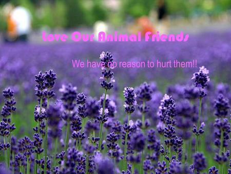 Love Our Animal Friends We have no reason to hurt them!!