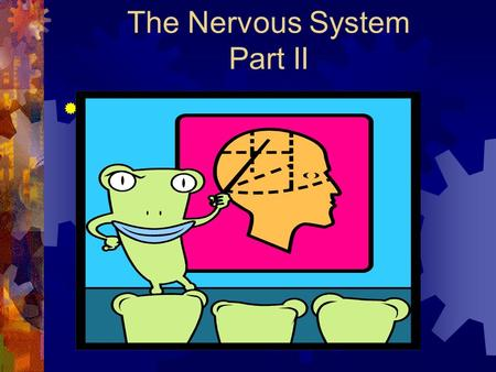 The Nervous System Part II  Cerebrum  Largest part of the brain  CEREBRAL CORTEX – layer of gray matter that covers the upper and lower surfaces of.