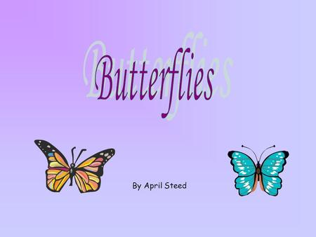By April Steed Table of Contents What is a butterfly? Flying Butterfly life cycle Life cycle organization chart –EggEgg –LarvaLarva –PupaPupa –AdultAdult.