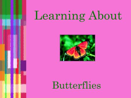 Learning About Butterflies  An insect  Has wings that it uses to fly  Similar to a moth but not the same What is a butterfly?