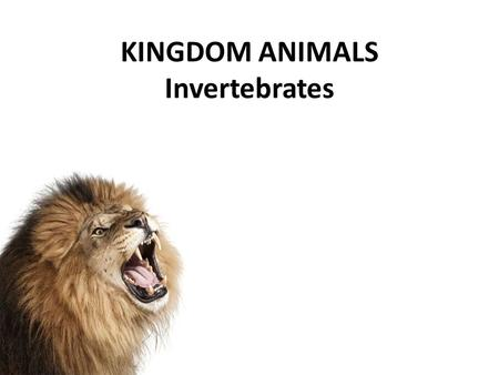 KINGDOM ANIMALS Invertebrates. KINGDOM ANIMALIA All multicellular, eukaryotic, heterotrophic Invertebrates: – Animals WITHOUT a backbone – Most abundant.