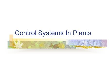 Control Systems In Plants. Plant Hormones Five known classes of hormones control plant growth and development Auxin – promotes fruit growth Cytokinins.