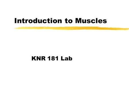 Introduction to Muscles KNR 181 Lab. Skeletal Muscles zSkeletal muscles extend from one bone to another, and cross at least one joint. zMuscle contraction.