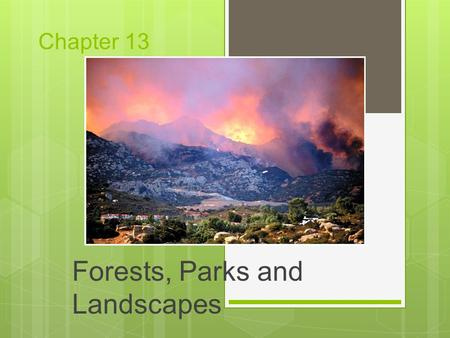 Chapter 13 Forests, Parks and Landscapes. Modern Conflicts over Forest Land and Forest Resources  Do we use the trees as resources or conserve them?