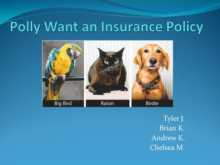 Tyler J. Brian K. Andrew K. Chelsea M.. Insurance Cost of medical care for pets is rising fast which is spurring on sales for pet insurance. Pet owners.