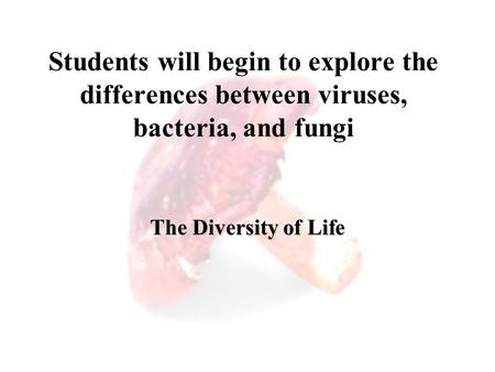 Students will begin to explore the differences between viruses, bacteria, and fungi The Diversity of Life.