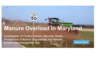 Manure Overload in Maryland Investigation of Poultry Industry Records Shows Phosphorus Pollutions Regulations Are Needed to Save the Chesapeake Bay Read.