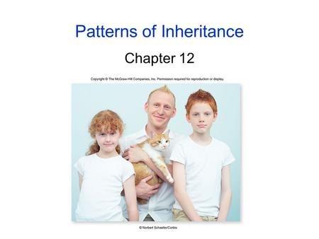 Patterns of Inheritance Chapter 12. 2 Early Ideas of <strong>Heredity</strong> Before the 20 th century, 2 concepts were the basis for ideas about <strong>heredity</strong>: -<strong>heredity</strong>.