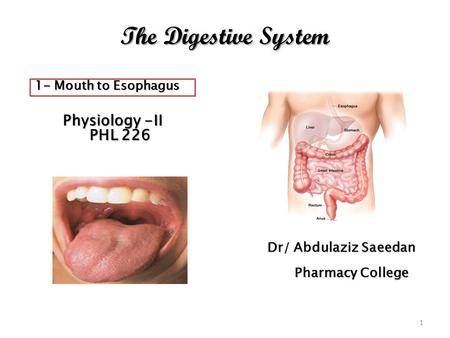 The Digestive System Physiology -II Physiology -II PHL 226 PHL 226 Dr/ Abdulaziz Saeedan Pharmacy College Pharmacy College 1 1- Mouth to Esophagus.