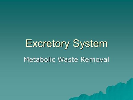 Excretory System Metabolic Waste Removal. Organs of Excretory System  Lungs – CO2 and water  Skin - Sweat  Kidneys – Urine  Liver – detoxification.