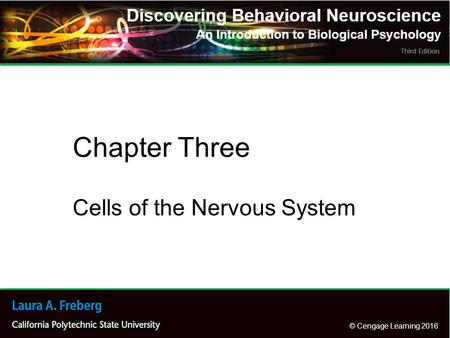© Cengage Learning 2016 Cells of the Nervous System Chapter Three.