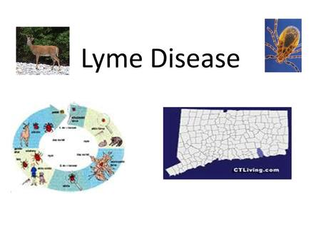 Lyme Disease. Lyme disease is caused by the bacterium Borrelia burgdorferi. spirochetalspirochetal bacteriabacteria.