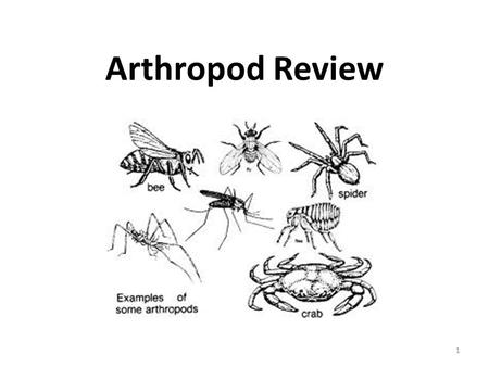 Arthropod Review 1. Which arthropod(s) have a cephalothorax? 2.