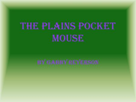 The Plains Pocket Mouse By Gabby Reyerson Section A! Features.