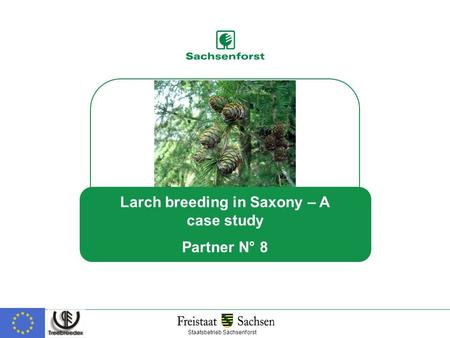 Larch breeding in Saxony – A case study Partner N° 8 Staatsbetrieb Sachsenforst.