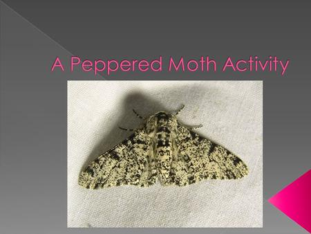  There are two major varieties of peppered moths, a light-colored variety and a dark-colored variety. These moths are active at night and rest on trees.