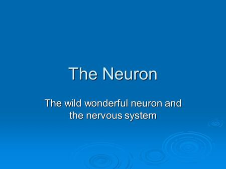 The Neuron The wild wonderful neuron and the nervous system.