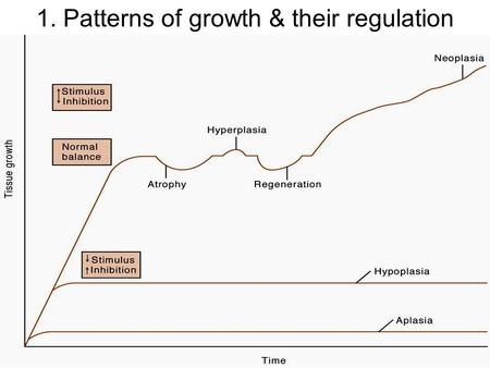 1. Patterns of growth & their regulation. 2. Atrophy.