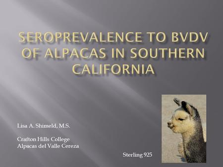 Lisa A. Shimeld, M.S. Crafton Hills College Alpacas del Valle Cereza Sterling 925.