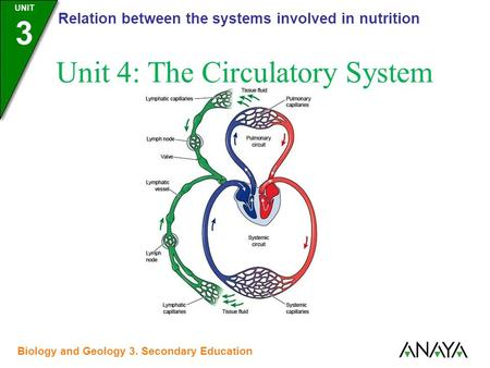 UNIDAD 3 Relation between the systems involved in nutrition UNIT 3 Biology and Geology 3. Secondary Education Unit 4: The Circulatory System.