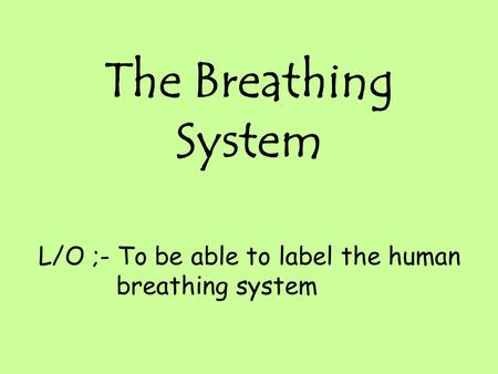 The Breathing System L/O ;- To be able to label the human breathing system.