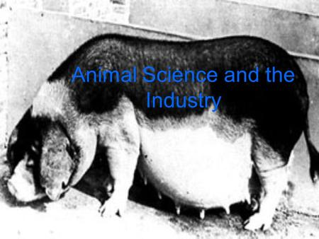 Animal Science and the Industry. Exploring the Swine Industry.