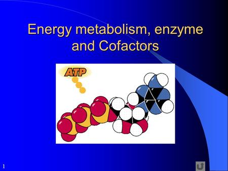 metabolism and enzymes forms of energy Although the possibility of an rna-catalysed metabolic network has been   metal-ion-binding rnas and/or peptides as early forms of enzymes  a  minimal biochemical walk between precursors for biomass and energy.