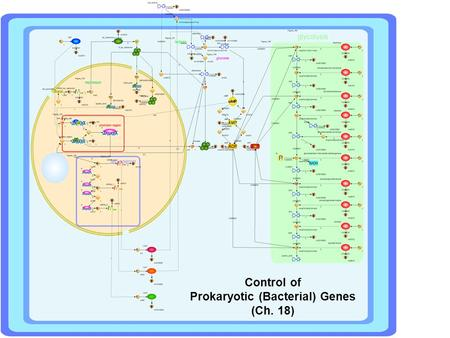 Control of Prokaryotic (Bacterial) Genes (Ch. 18)