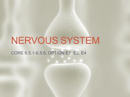 NERVOUS SYSTEM CORE 6.5.1-6.5.6, OPTION E1, E2, E4.