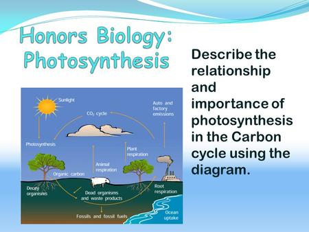 Describe the relationship and importance of photosynthesis in the Carbon cycle using the diagram.