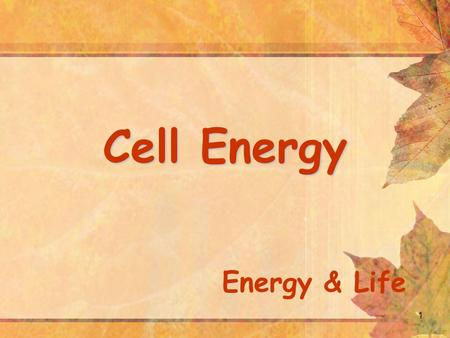 1 Cell Energy Energy & Life. All Organisms need energy Nudibranch cells need energy.