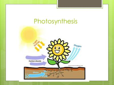 Photosynthesis. Energy and Life  Autotroph: organisms that make their own food  Heterotrophs: organisms that obtain energy from the foods they consume.