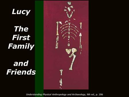 Lucy The First Family and Friends Understanding Physical Anthropology and Archaeology, 9th ed., p. 206.