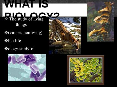 WHAT IS BIOLOGY?  The study of living things  (viruses-nonliving)  bio-life  ology-study of.