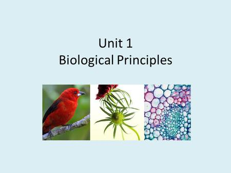 Unit 1 Biological Principles. What is Biology? Bio= Life ology= Study of Divisions of Biology Botany: Study of Plants Zoology: Study of Animals Microbiology: