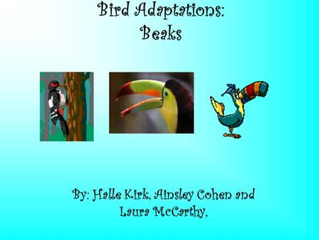 Bird Adaptations: Beaks By: Halle Kirk, Ainsley Cohen and Laura McCarthy,