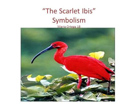The Scarlet Ibis Summary