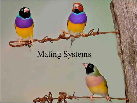 Mating Systems. Mating System Species typical pattern of mate-finding, reproduction and parenting of offspring.