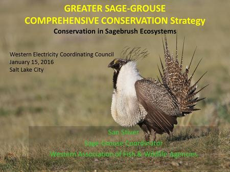 GREATER SAGE-GROUSE COMPREHENSIVE CONSERVATION Strategy Conservation in Sagebrush Ecosystems San Stiver Sage-Grouse Coordinator Western Association of.