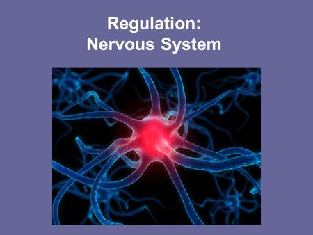 Regulation: Nervous System. A World Without Pain Perry Goldberger, 15, can't distinguish between hot and cold and cannot feel pain Four-year-old Roberto.
