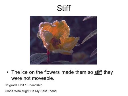 Stiff The ice on the flowers made them so stiff they were not moveable. 3 rd grade Unit 1 Friendship Gloria Who Might Be My Best Friend.