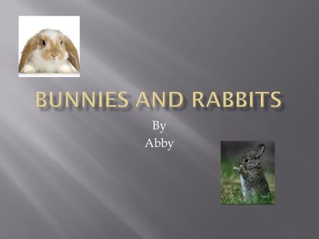 By Abby.  A female rabbit is called a doe.  A male rabbit is called a buck.  A baby rabbit is called a kit or a kitten.