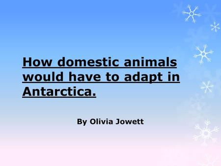 How domestic animals would have to adapt in Antarctica. By Olivia Jowett.