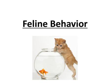 Feline Behavior. Industry American Association of Feline Practitioners Accredited by the American Veterinary Medical Association (AVMA)