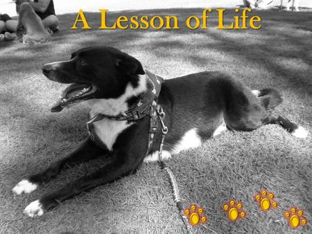 A Lesson of Life. Lives are Finite Being a veterinarian, I had been called to examine a ten-year-old Irish Wolfhound named Belker. The dog's owners, Ron,
