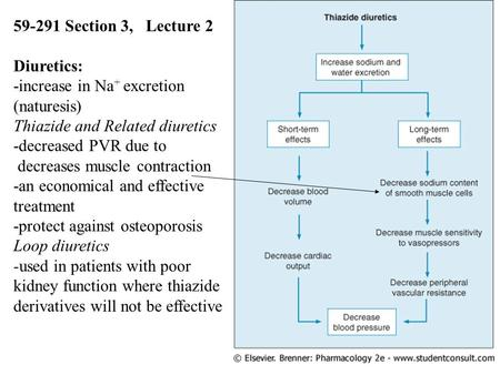 1 59-291 Section 3, Lecture 2 Diuretics: -increase in Na + excretion (naturesis) Thiazide and Related diuretics -decreased PVR due to decreases muscle.