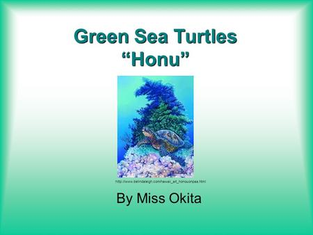 "Green Sea Turtles ""Honu"" By Miss Okita"