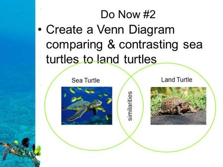 Do Now #2 Create a Venn Diagram comparing & contrasting sea turtles to land turtles Sea Turtle Land Turtle similarities.